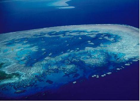 Bait Reef - www.divetrips.com.au