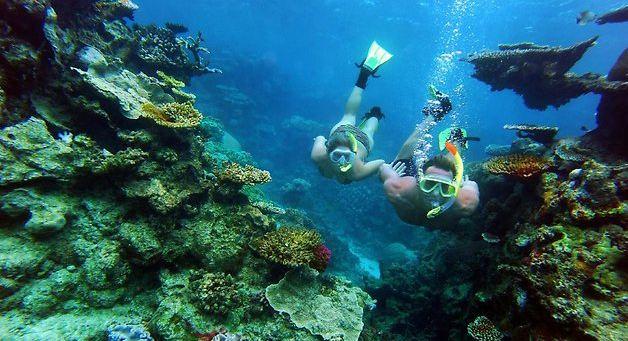 Flynn Reef dive sites Australia